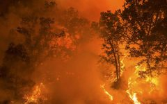 U.S. Wildfires: What You Need To Know